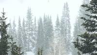 Snow Fall Stock Video HD