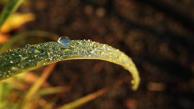 HD Footage: Dew Drop on Blade of Grass Stock Video