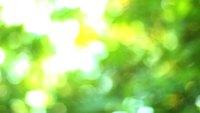Free HD Hiking Stock Video