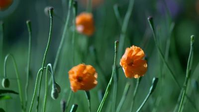 Image Result For Orange Daisy Petal