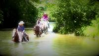 Horseback Riding In River