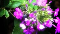 Bee_dream-hd_720p_video_sharing