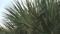 Wild Bird Stock Video on Top of Palm Trees