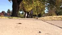 ON A WALK
