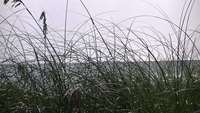 Sea Through Beach Grass