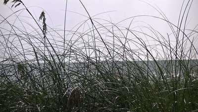 Sea Through Beach Grass