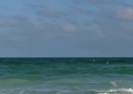 Birds-flying-over-ocean-stock-video