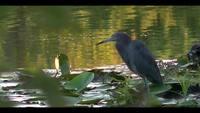 Vilda fåglar stock video