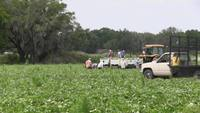 Migrant Farm Workers Stock Video