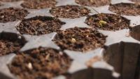 Seeds Growing HD Stock Video