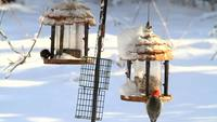 Birds On Feeders HD Stock Video