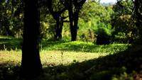 Zonnige Bos Glade HD-stock footage