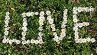 Flower Love Royalty Free HD Stock Footage