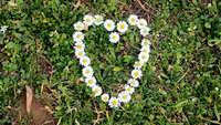Heart_shaped_flowers