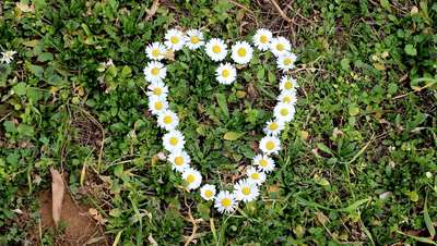 Heart Shaped Flowers HD Stock Footage