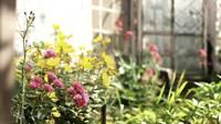 Växthus Blommor Gratis HD-Stock Video