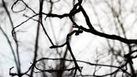 Bare Tree Branches Royalty Free Video