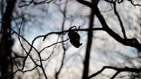 Leaf_blown_by_wind