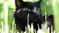 Black Cat in Grass Fotos de archivo