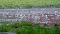 Slow Motion Rain Stock Footage