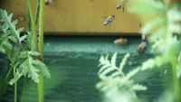 Beehive Close-up Gratis HD-video