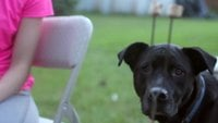 Dog Looking Around HD Stock Footage