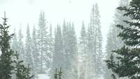Heavy_snow_in_the_woods