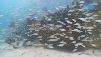 Undersea_exotic_fish_free_hd_footage