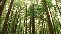 Olympic National Park Wildlife Gratis Footage