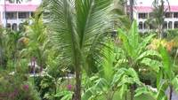 Stock Video of Palm Trees at Punta Cana