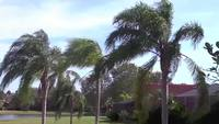 Breezy palm trees stock stock