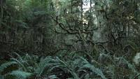 Gratis Dark Spooky Redwood Forest