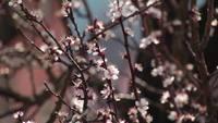 Plink blommor