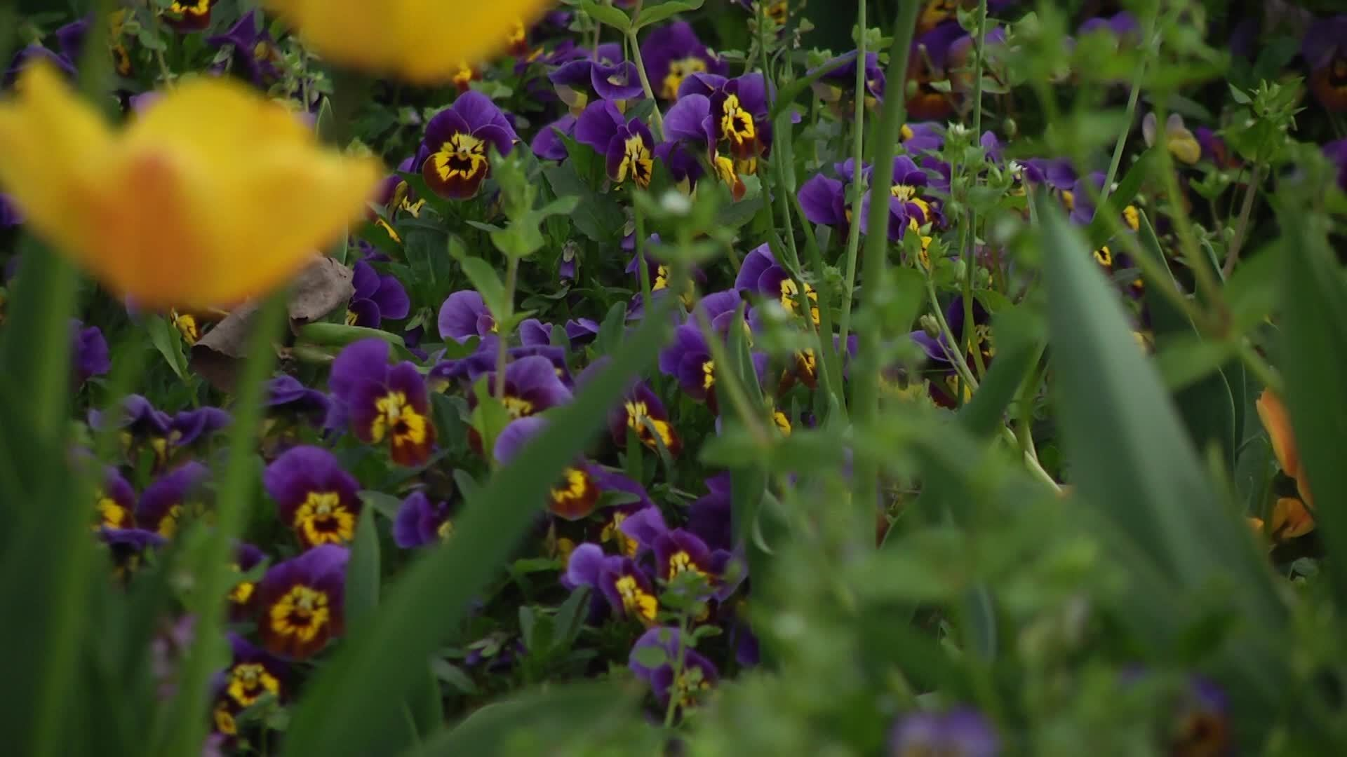 Garden With Flowers Free Hd Video Clips Stock Video Footage At