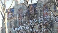 Árvore da flor de cerejeira
