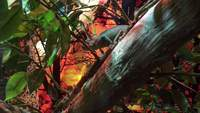 Chameleon on Branch 4K