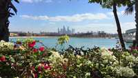 Dubai_through_flowers