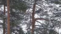 Árvore sob neve