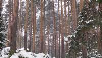 Trees under the skyilne