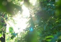 Beautful sunlight and green leaves 4K stock video