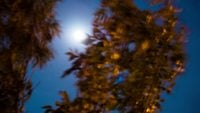 Timelapse of a full moon passing behind tree 4K stock video