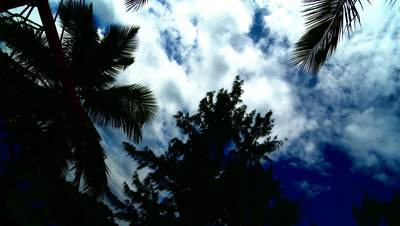 White clouds blue sky and palm trees