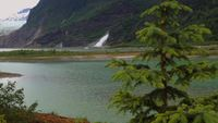 Waterfall-and-glacier-behind-a-spruce-tree-in-alaska-hd