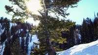 Solig vinter 4k levande bakgrund