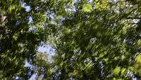 Trees-fly-by-overhead-1080p-24fps