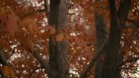 Parque central no outono