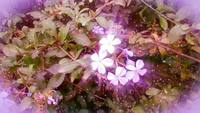 Blumen frei glühen