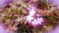 Flores-resplandor-gratis