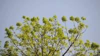 Tree Leaves Stock Video