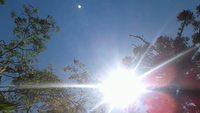 Free Sun and Nature Archivo de Vídeo